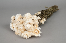 o461kh Natural white dried helichrysum H46cm