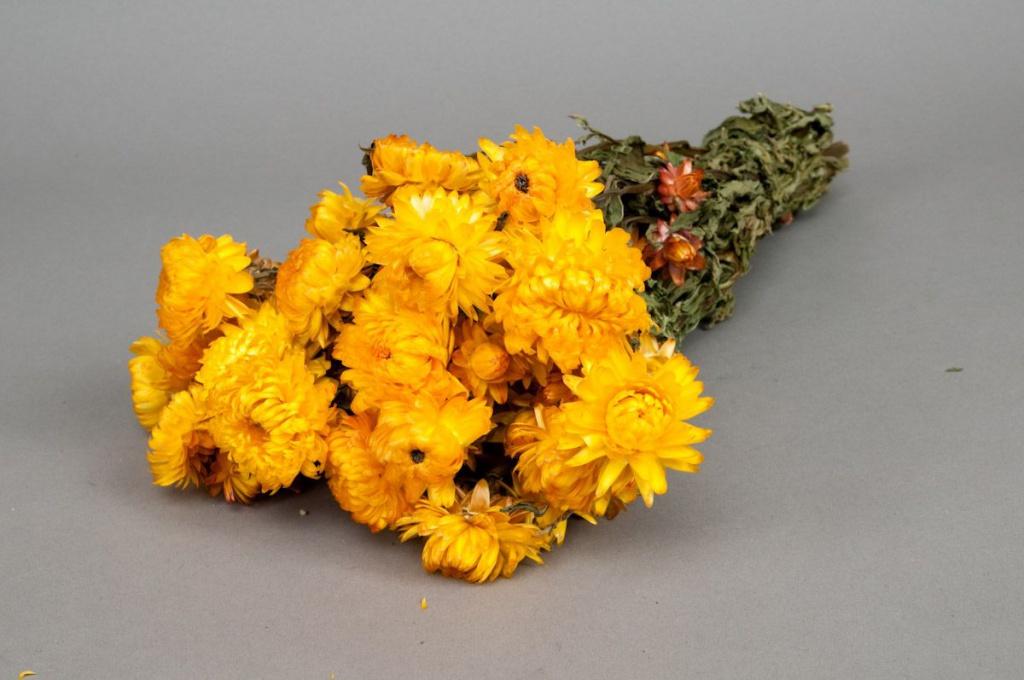o463kh Botte d'immortelle jaune naturelle séchée H46cm