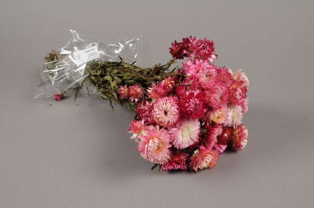 o469kh Immortelle séchée rose naturel H46cm