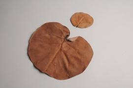 oe01ab Dried natural hojas monedas