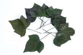 oe45vv Sachet de 10 feuilles de lierre stabilisé vert 20/30