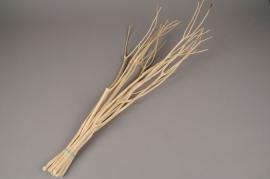 ok45ab Bunch of natural mitsumata H55cm