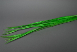 Palm tree leaves spring green x10 pieces 1m10/1m20