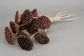o659ab Paquet de 10 lotus naturel sur tige H42cm