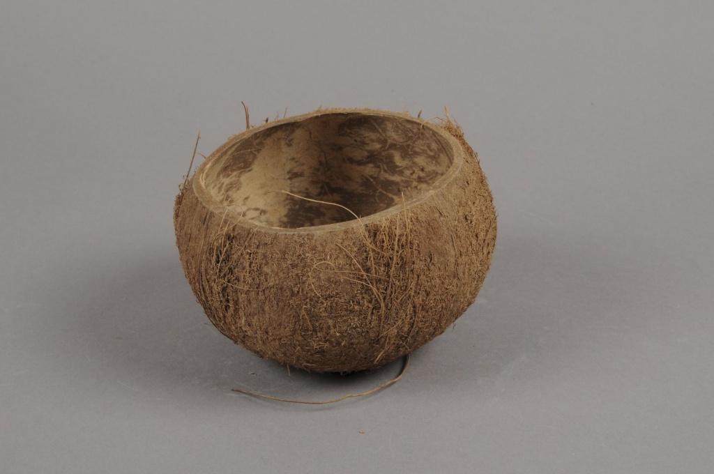 ex28wg Paquet de 5 noix de coco naturelles