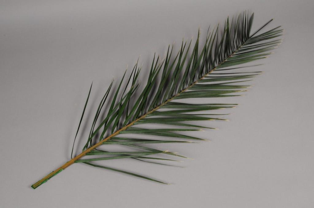 pf08vv Feuilles de palme stabilisées vertes H100cm