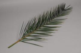 pf08vv Green preserved palm leaves H100cm