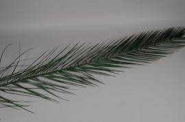 pf12vv Set of 5 preserved green palm tree H150cm