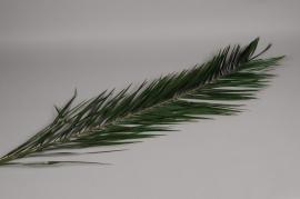 pf16vv Set 5 leaves of stabilized phoenix green H200cm