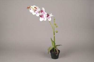 x071fp Phalaenopsis en pot artificiel blanc H70cm