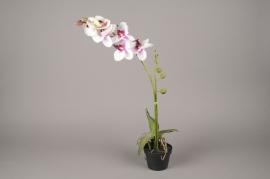 x071fp Phalaenopsis blanc artificiel en pot H70cm