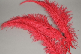 pl01ek Bag of 5 red ostrich feathers