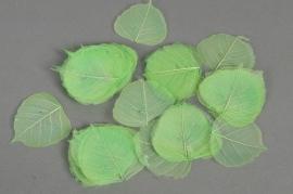re21mi Pack of 100 skeleton leaves green D6cm