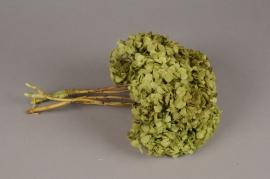 s445ab Hortensia préservé vert pistache H40cm