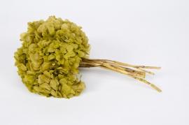 s445ab Pistachio green preserved hydrangea H40cm
