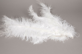 al31ek Sachet de 5 plumes d'autruche blanc