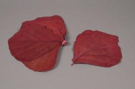 me07ab Sachet de feuilles de palas stabilisé bordeaux  D10/20cm