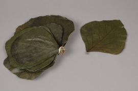 te07ab Sachet de feuilles de palas stabilisé vert D10/20cm
