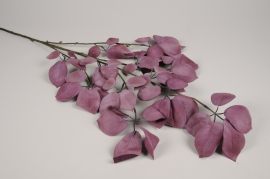 x485ee Schefflera artificiel violet H119cm