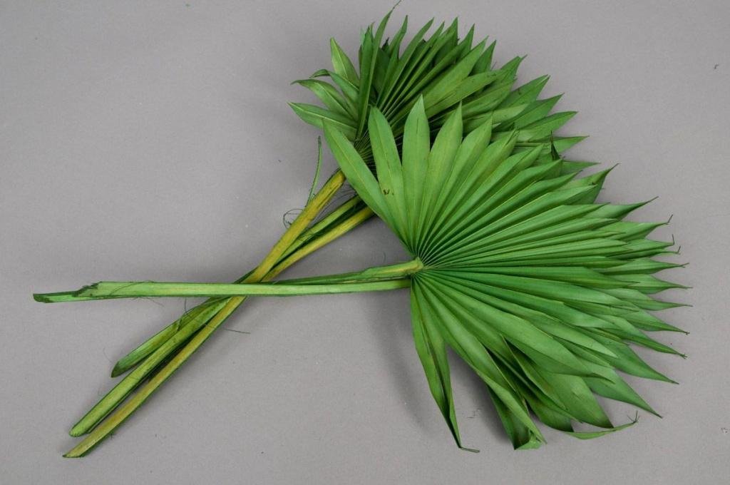 te19ab Sachet de palm sun vert séché vert H60cm