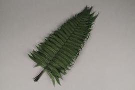 tf15vv Green stabilized rock fern L42cm