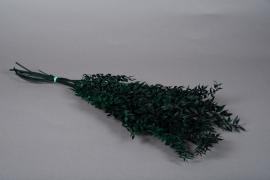 tf49ab Ruscus préservé vert H75cm