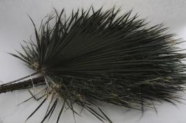 tf69vv Set of 5 preserved green palm leaf H120cm