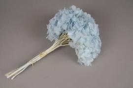 u445ab Hortensia préservé bleu clair H40cm