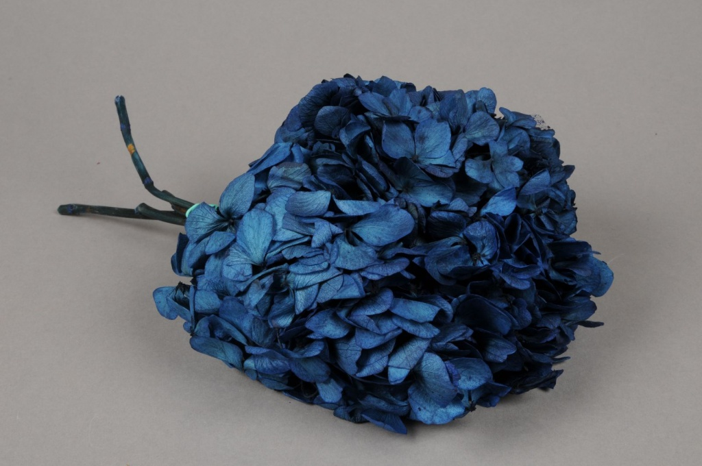w445ab Dark blue preserved hortensia H33cm