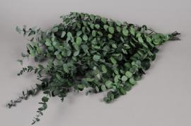 x001vv Eucalyptus gunny vert stabilisé vert 30/60