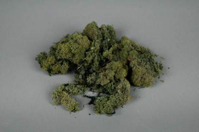x002el green preserved moss