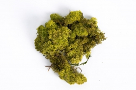 x003el Dried moss spring green 500gr