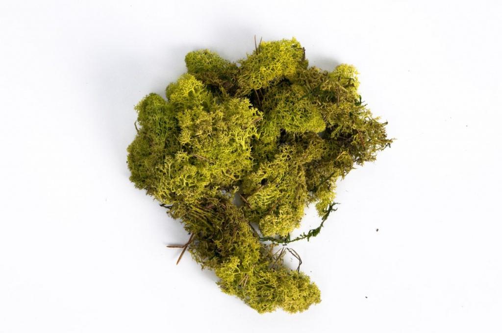 x003el Mousse Islande vert printemps 500g