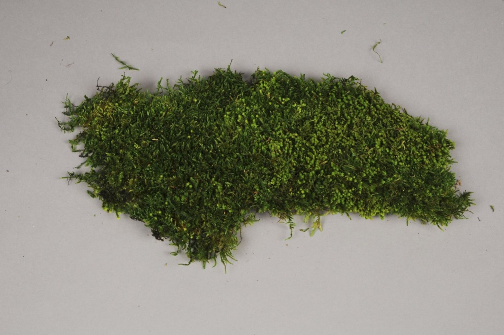 x003vv Box of preserved moss 2.5kg