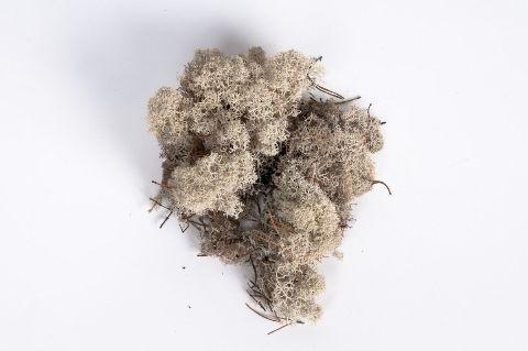 x004el Natural preserved iceland moss 500g