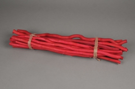 x004sx Red bundle kuwa H50cm