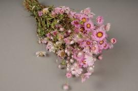 x006kh Botte de rodanthe rose naturelle séchée H40cm