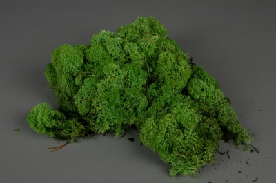 x007el Green preserved Iceland moss 500g