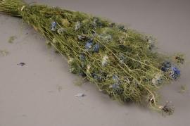 x010kh Natural dried nigella blue H60cm