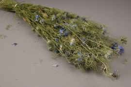 x010kh Blue natural dried nigella H60cm