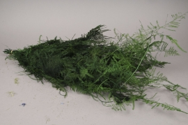 x011ab Pack of preserved asparagus fern H70cm