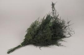x011ab Pack of preserved asparagus fern H70cm