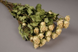 x013kh White dried roses H40cm