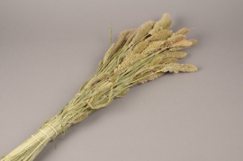 x014kh Bale of natural dried weath H73cm