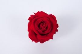 x014vv Boîte de 6 roses préservées rouges