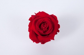 x014vv Box of 6 preserved red roses