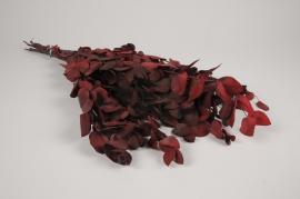 x015ab Eucalyptus espiral stabilisé rouge H63cm