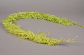 x017ab Pack of preserved green fern H150cm