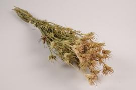 x017kh Orientalis dried nigella H60cm