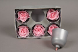 x017vv Box of 6 preserved pink roses